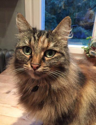 Twixie cat